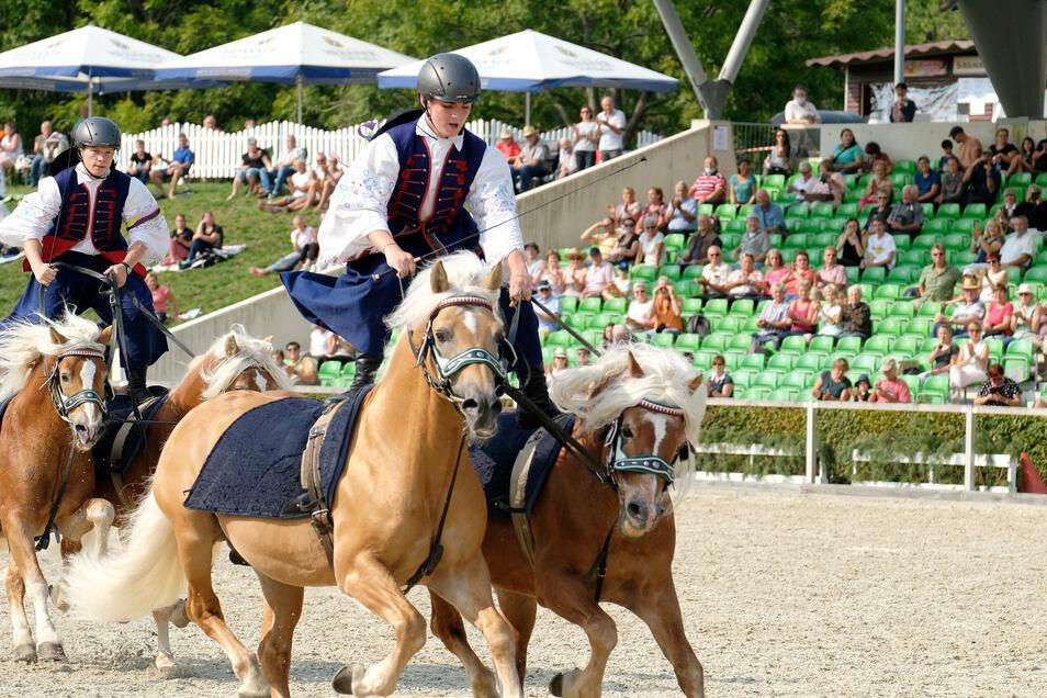 """In dem historischen Bild """"Ungarische Post"""" stehen Dominik Fickl und Georg Bohne auf je zwei Haflingern, die eng nebeneinander galoppieren. So waren einst ungarische Pferdehirten unterwegs, um die Steppe besser zu überblicken."""