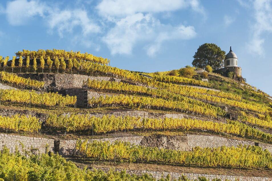Der Jacobstein ist einer der Lieblingsorte von Kulturamtsleiterin Gabriele Lorenz in Radebeul.
