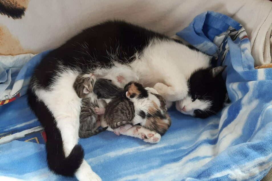 Der Tierschutzverein Bischofswerda hat unter anderem dafür gesorgt, dass ausgesetzte Katzen in Ruhe und Sicherheit ihre Jungen zur Welt bringen konnten.