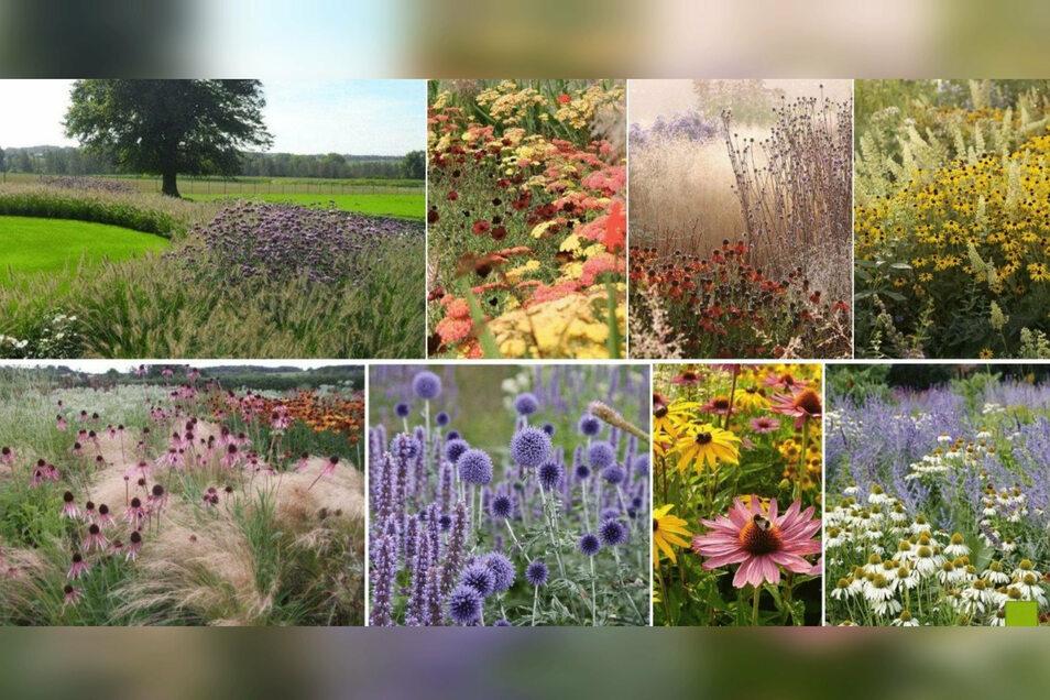 Im Gestaltungskonzept sind auch viele Blühstreifen enthalten. Gepflanzt werden sollen vor allem Gräser und Trockenstauden, die pflegearm sind und auch im Winter schön aussehen.