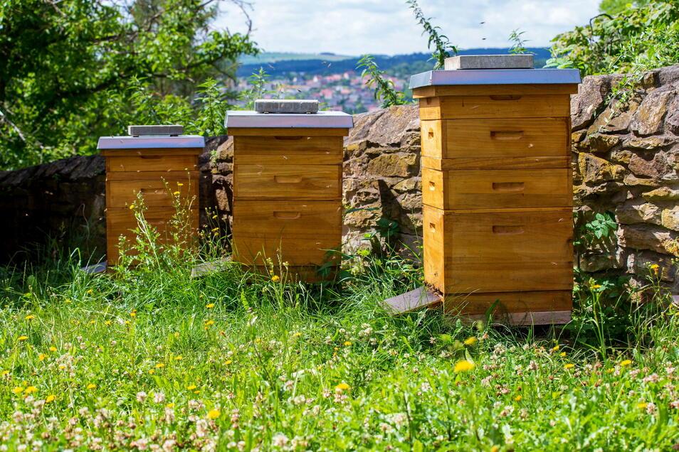 Die neuen Mitarbeiter: Zur Sicherung der Bestäubung hat Gutschef Lars Folde vierzig Bienenvölker angeschafft.