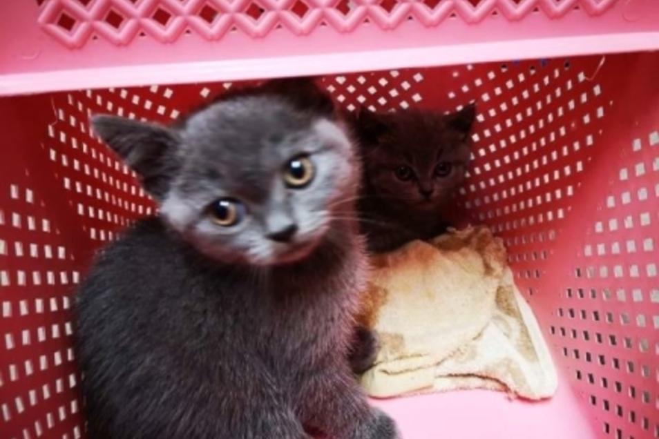 Auch diese Katze wurde im Schmuggelfahrzeug entdeckt.