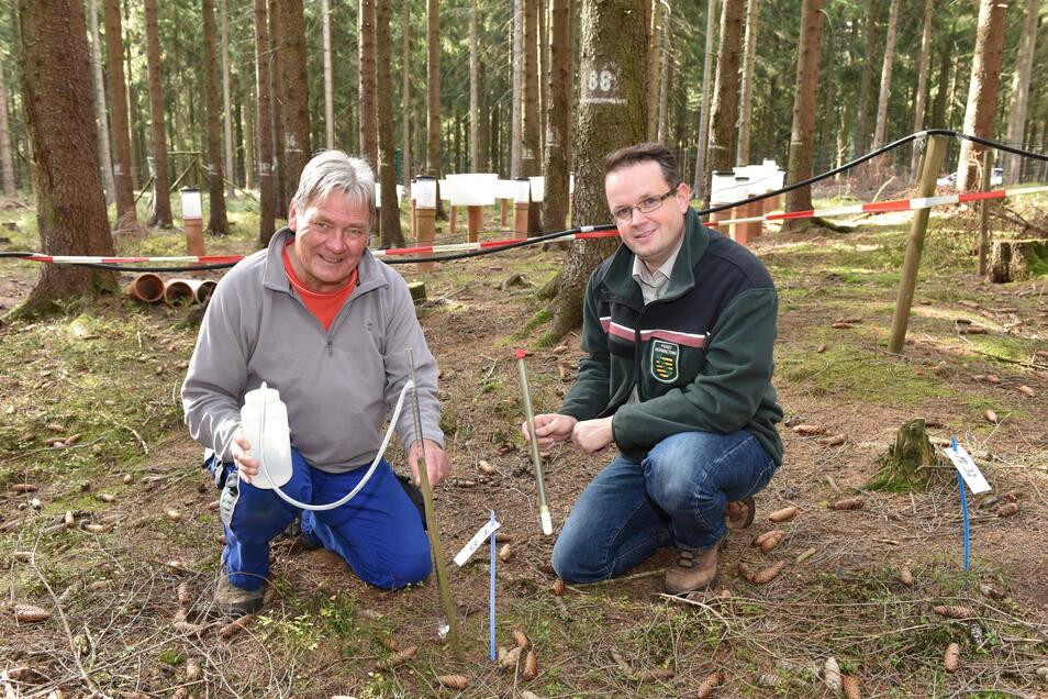 Klimabeobachter Thomas Schmid (li.) und Frank Jacob vom Staatsbetrieb Sachsenforst sammeln Messergebnisse auf der Untersuchungsfläche bei Waldidylle.