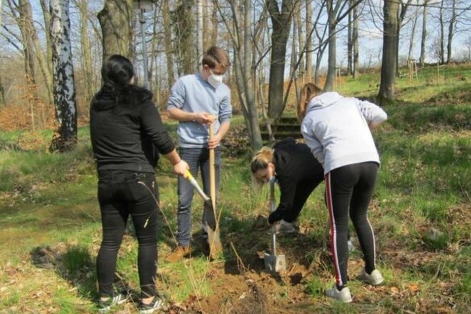 Bewusst haben die Berufsschüler bei ihrer Umweltaktion nicht nur Buchen und Linden, sondern um den Bienen zu helfen, auch Obstbäume wie Sauer- und Süßkirschen und Apfelbäume gepflanzt.