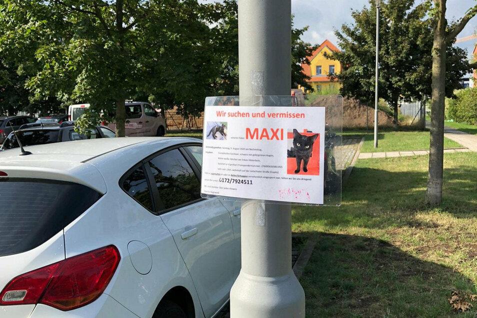 Nun hängen auch in Heidenau die Schilder, auf denen Familie Hegewald nach Maxi sucht.