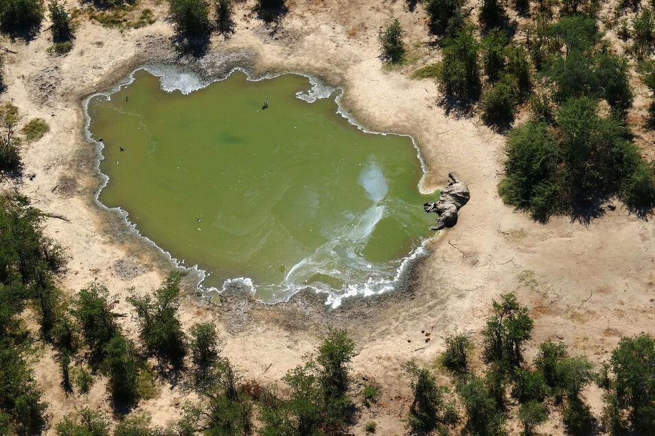 Ein toter Elefant liegt an einer Wasserstelle: Innerhalb eines Monats wurden Hunderte verendete Tiere gezählt.