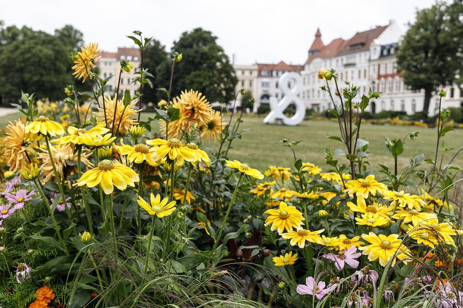 Blumen auf dem Wilhelmsplatz