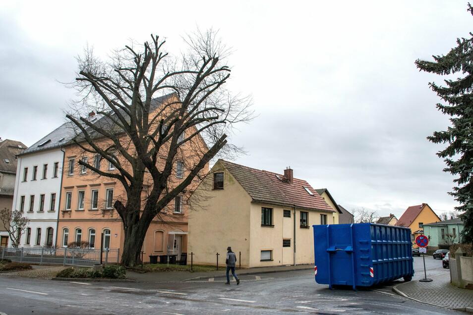 Die Linde an der Ecke Chemnitzer-/Gartenstraße ist am Mittwoch gestutzt worden.