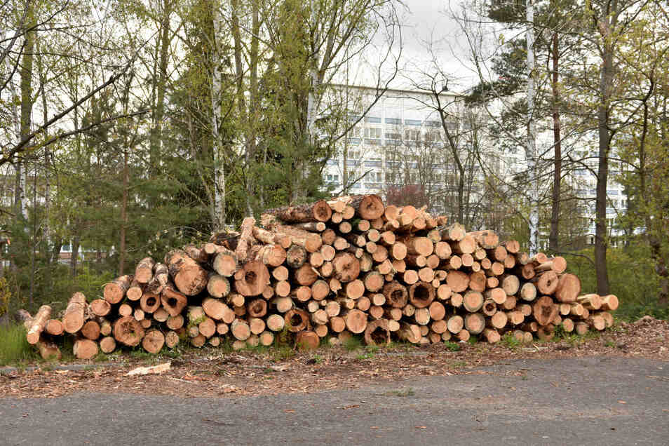 Ein Forstunternehmen hat im Auftrag des Lausitzer Seenland Klinikums vom Borkenkäfer befallene Kiefern gefällt. Das Holz wird jetzt nach und nach abtransportiert. Das Wäldchen soll Wald bleiben. Vor allem die Laubbäume blieben stehen.
