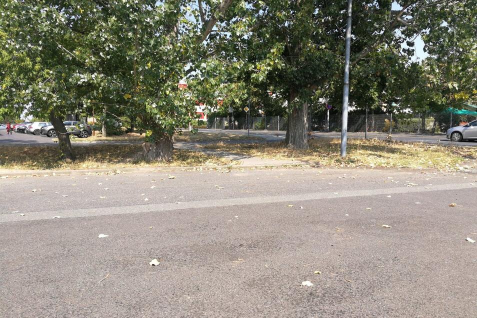 Die Stadt will hier an der Külz-Straße Platz für den Bus und private Pkw schaffen, die zur Schule wollen. Doch der Kauf des Grundstücks ist ein Problem.