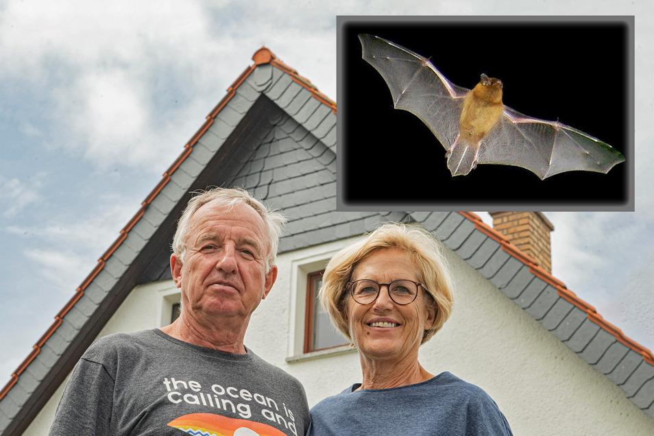 Unterm Dach von Familie Peters in Lückersdorf bei Kamenz leben zurzeit 72 Zwergfledermäuse.