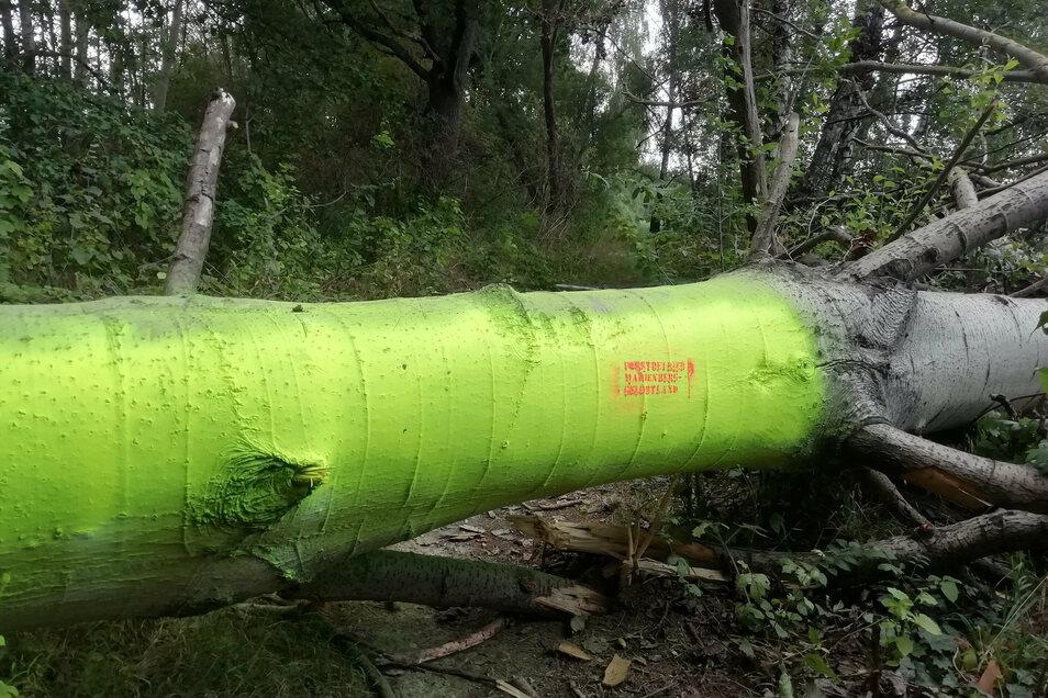 Ein frisch gefällter Baum versperrt per Signalfarbe einen Schleichweg gleich hinter Doberschütz.