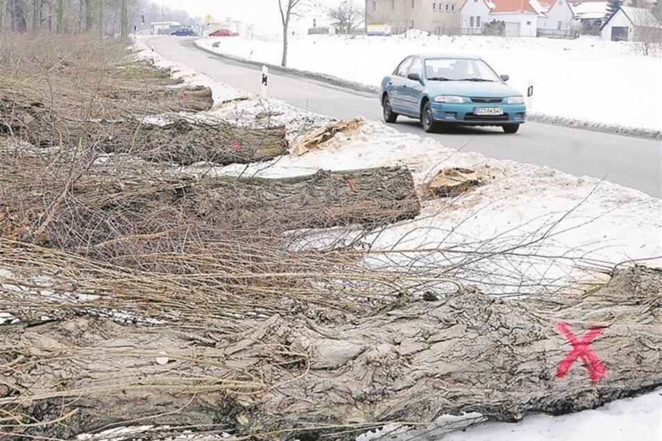 Für die Westtangente mussten Hunderte Bäume gefällt werden – so wie 2010 an der Neustädter Straße. Ersatz wird neben der Straße und anderswo gepflanzt.