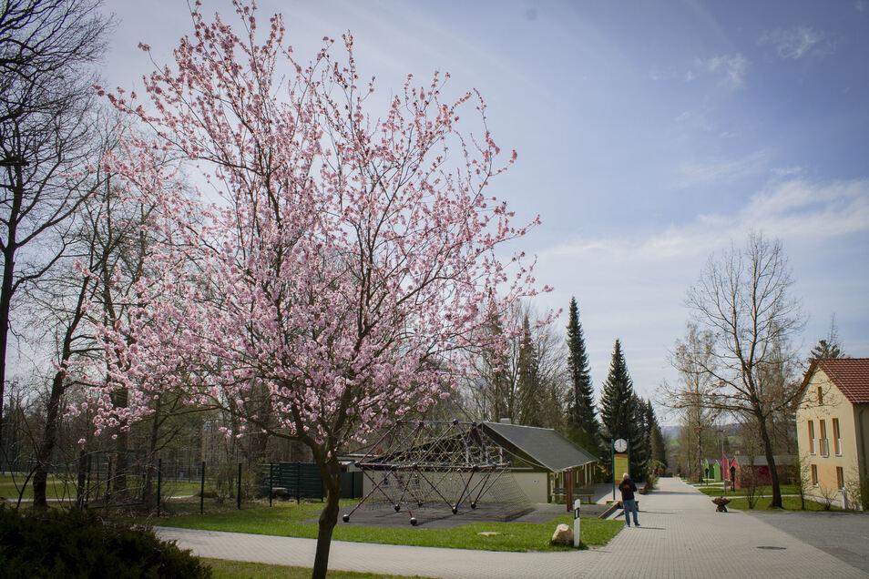 Der Schein trügt: Nur die Natur blüht im Kindererholungszentrum Querxenland in Seifhennersdorf.