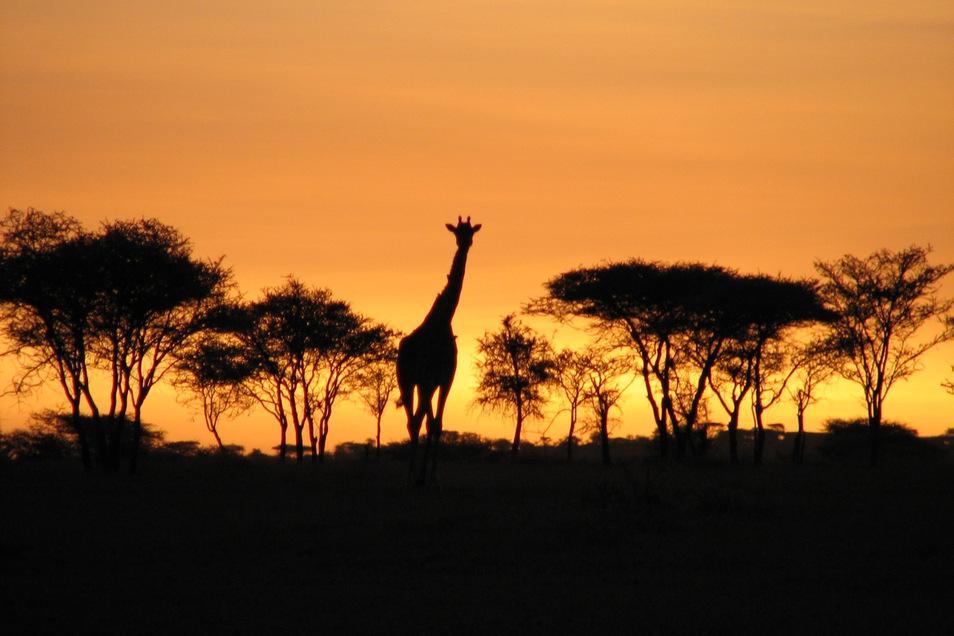 Faszination Afrika: Auch ohne Reise erlebbar.