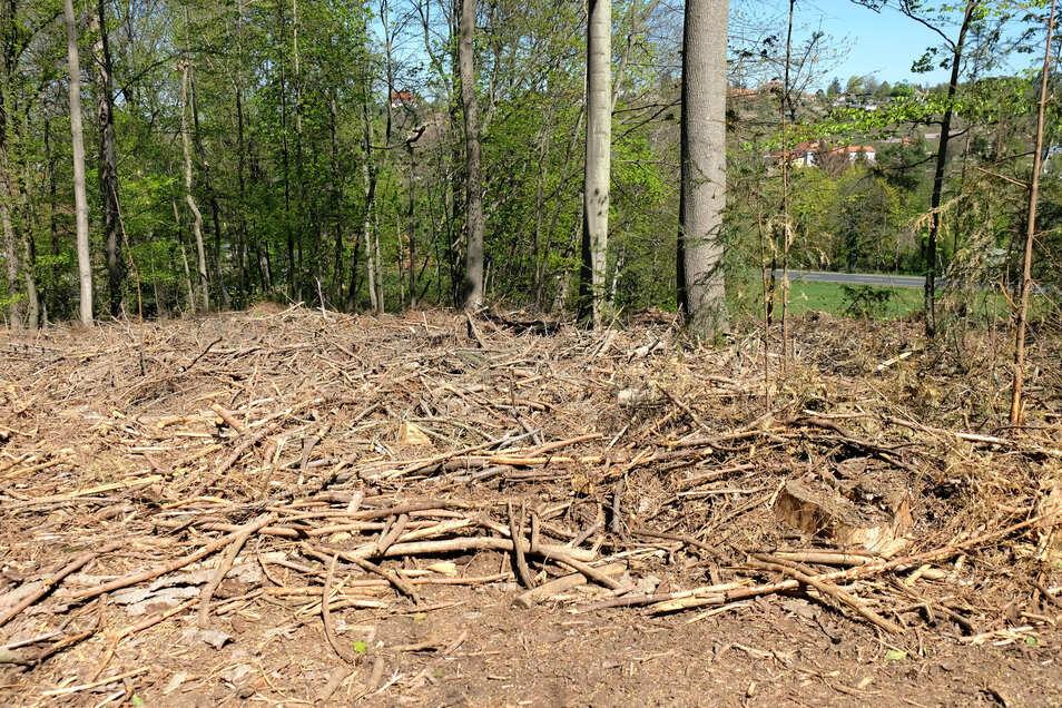 Kahlschlag in einem Waldstück im Park Siebeneichen, in dem Fichten standen. Dass offensichtlich nur einige Äste durch die beauftragte Firma weggeräumt worden sind, verwundert.