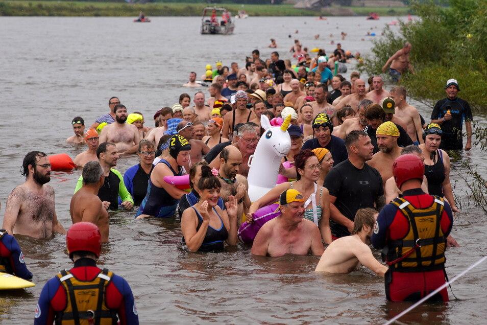 Mehr als 800 Teilnehmer schwammen am Sonntag durch die Elbe.