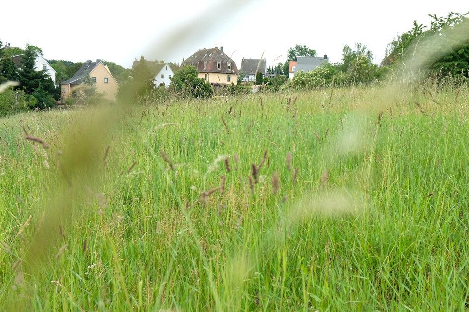 Noch ist es eine grüne Wiese: Doch auf diesem Grundstück am Meißner Fürstenberg sollen ökologisch vorbildliche Bauten entstehen.