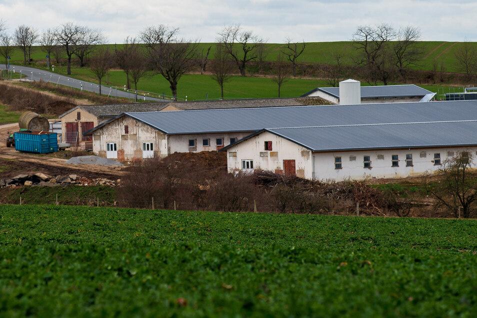 Der Ausbau der alten Schweinemastanlage in Langenwolmsdorf bei Stolpen ist weiterhin ein Thema für die Menschen in dem Ort.