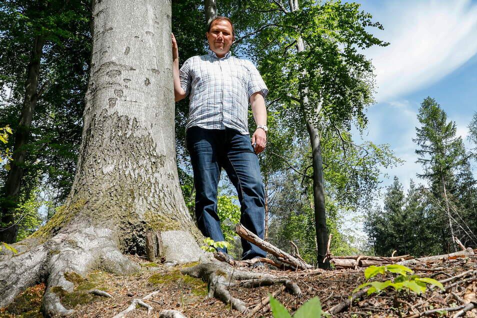 Förster Tilo Freier macht sich Sorgen um die Wiederaufforstung der vom Borkenkäfer dezimierten Oberlausitzer Wälder.