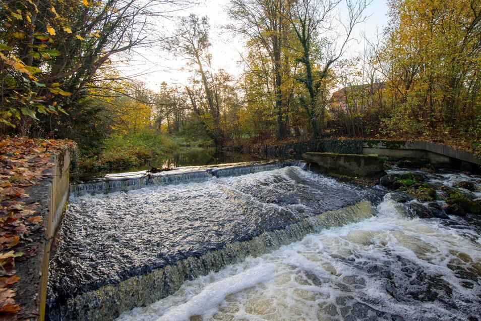 Durch den Rückbau von Wehren kann die Durchgängigkeit von Gewässern wieder hergestellt werden. Wasserlebewesen können sich so wieder frei darin bewegen.