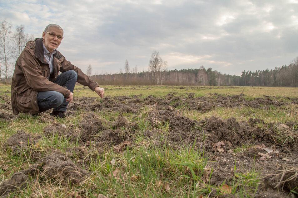 Bürgermeister Christian Nitschke begutachtet Wildschäden in einer Funktion, die er eigentlich gar nicht ausüben will: als Vorsitzender der Jagdgenossenschaft Horka.