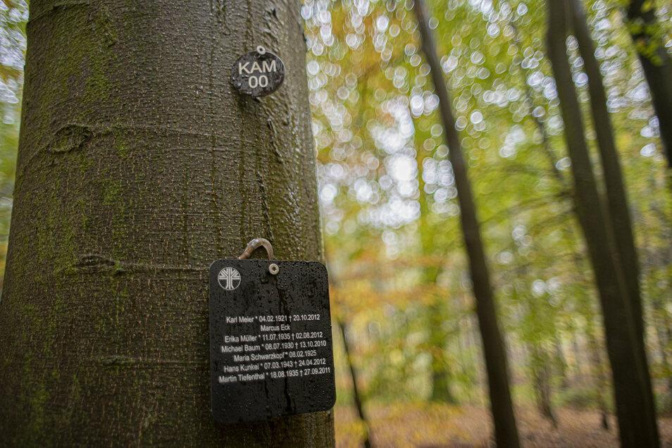 Alle Bäume sind nummeriert und mit Koordinaten versehen. Für die Namenstafeln gibt es unterschiedliche Modelle,