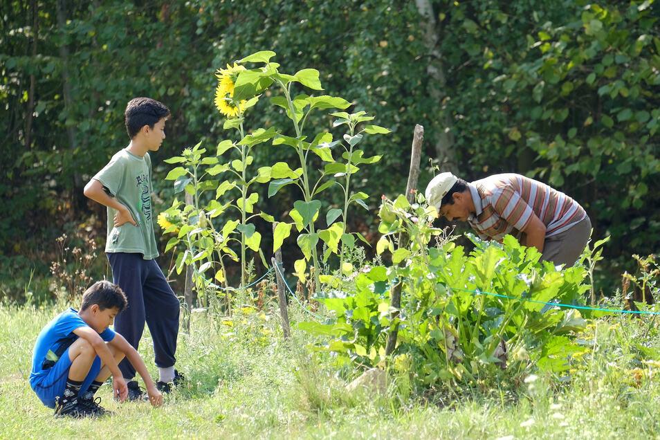 Geflüchtete bewirtschaften eine Parzelle im Internationalen Garten des Vereins Buntes Meißen.