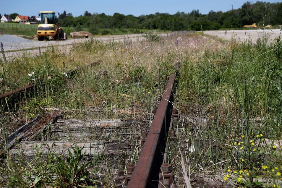 Sieht nicht so aus, ist aber offenbar ein Refugium für Eidechsen: das kaputte Gleisbett auf dem Areal des einstigen Kohlehandels, das jetzt zum Solarpark umgebaut wird.