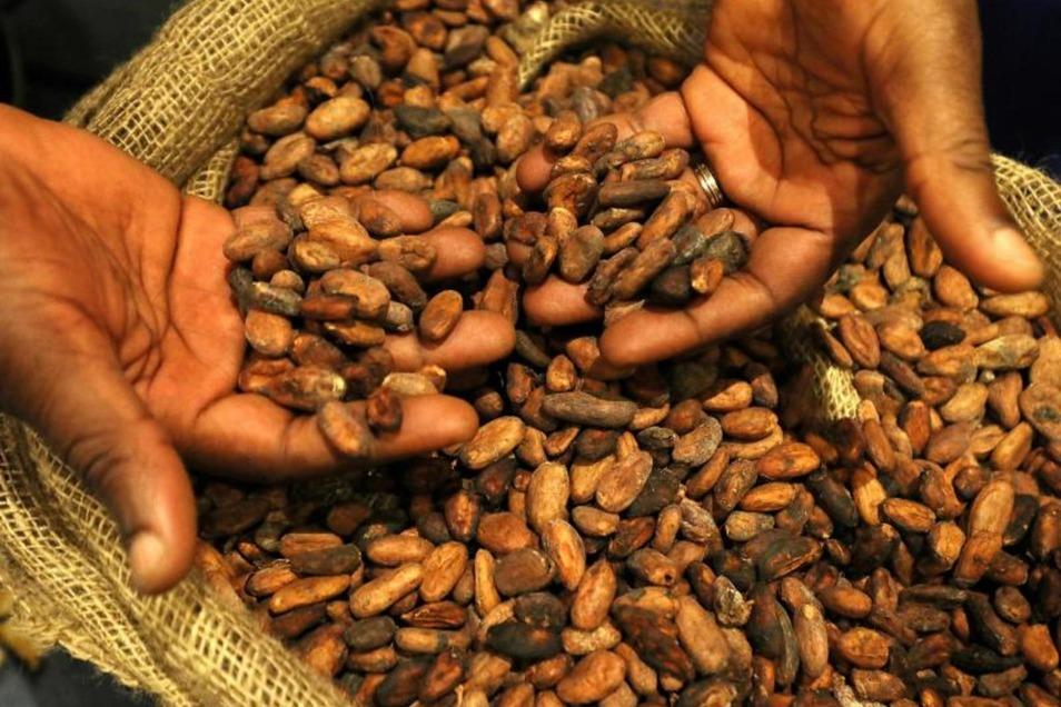Auf diese Nachricht haben Schoko-Fans gewartet: Dank seiner Verarbeitung enthält Kakao unter anderem Vitamin D2. Foto: Wolfgang Kumm