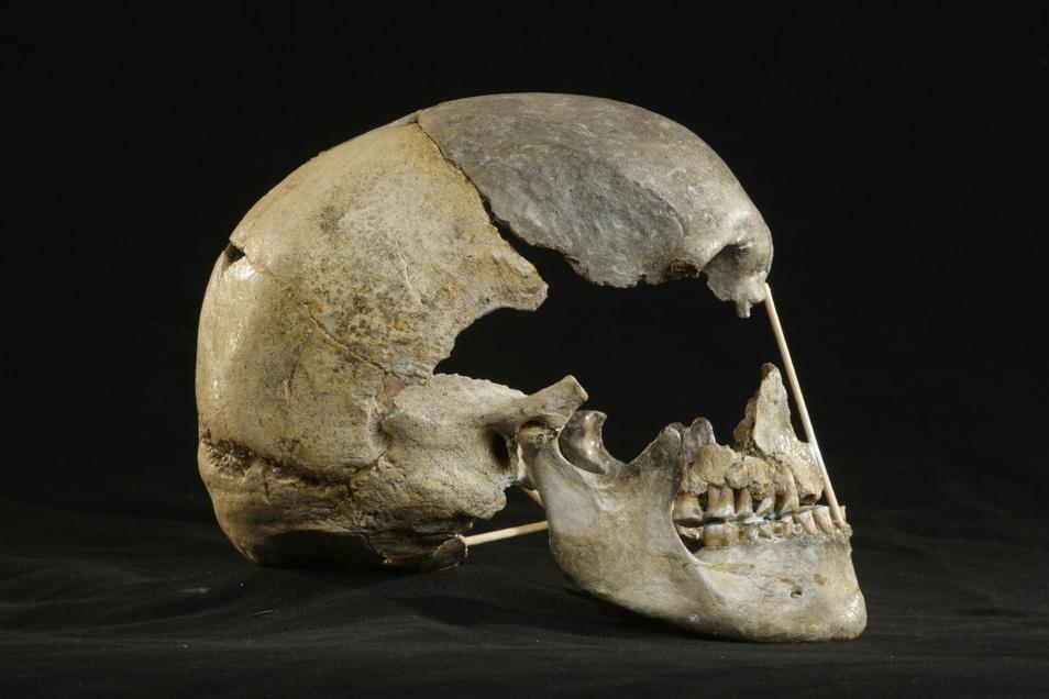 Dieser Schädel einer Frau lag seit mindestens 45.000 Jahren in einer tschechischen Höhle und könnte der bisher älteste Fund eines modernen Menschen in Europa sein.