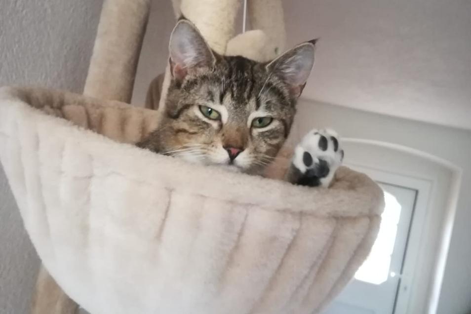 Insgesamt 20 junge Katzen unterschiedlichen Alters und aus verschiedenen Würfen können die Leisniger Tierschützer derzeit in liebevolle Hände vermitteln.