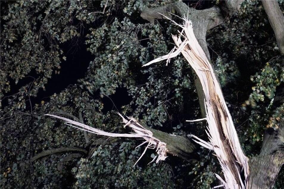 Der beschädigte Baum.