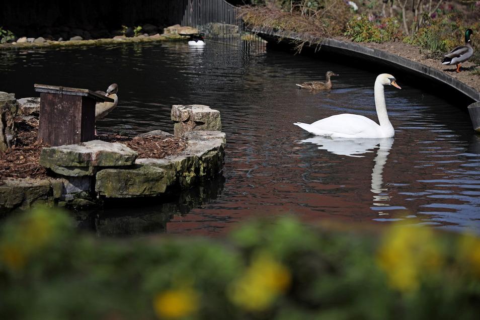 Dürfen trotz des neuen Infektionsschutzgesetztes Besuch empfangen: die Tiere im Riesaer Tierpark.
