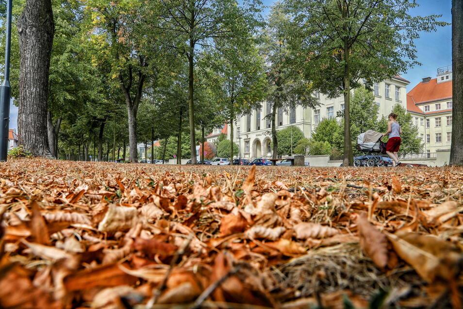 Im Herbst sammelt sich wieder viel Laub an. Das können Zittauer kostenfrei abgeben.