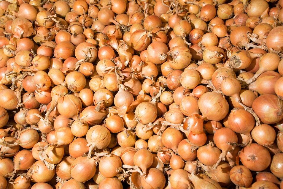 neben Spargel und Kartoffeln baut der Spragelhof Schertenleib auch Zwiebeln an. Künftig soll Bio-Gemüse das Angebot im Hofladen in Pulsitz ergänzen.