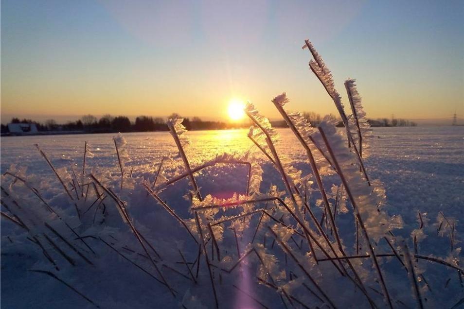 So wunderschön sind die verschneiten Wiesen in Börnchen bei Bannewitz. Aufgenommen von Jacqueline Barthel.