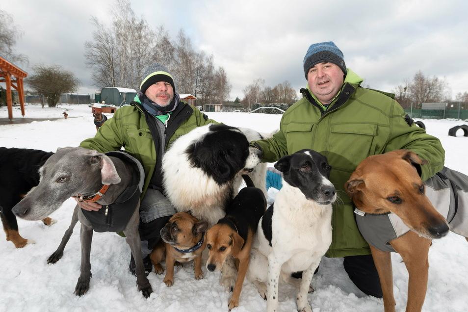 Steffen Neumann (rechts) betreut mit seinem Mitarbeiter Florian Fränkel täglich bis zu 25 Hunde in seiner Hundetagesstätte.