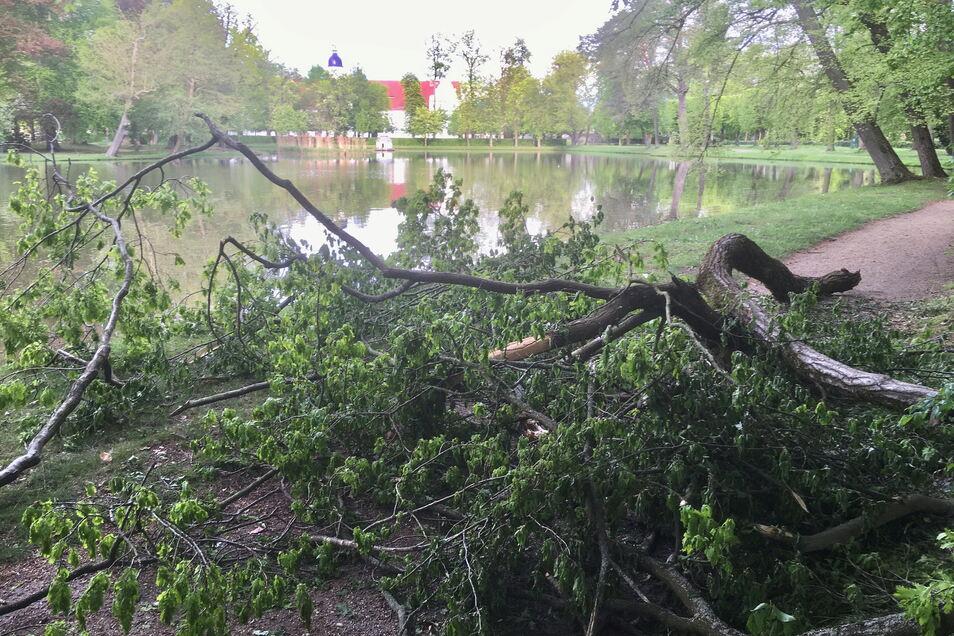 Diesen Baum im hinteren Teil des Zabeltitzer Barockparkes hat offensichtlich der Sturm über den Weg geworfen. Der Bauhof ist informiert.