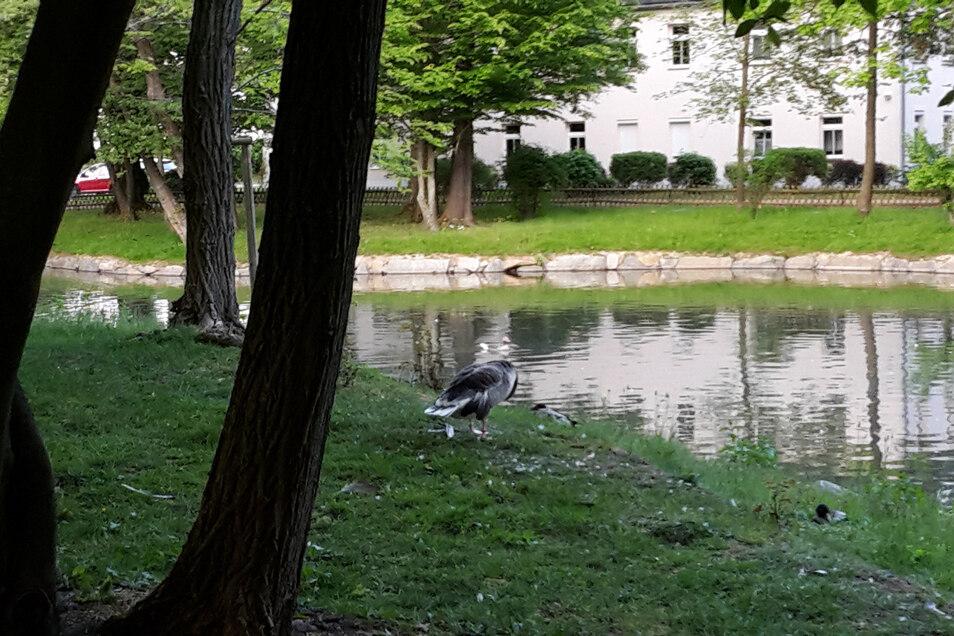 In Neustadt ist ein tierischer Kriminalfall zu lösen.