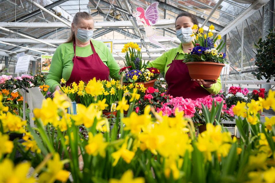Die Floristinnen Dagmar Richter und Martina Kühnel (r.) in der Gärtnerei Kühnel in Liegau-Augustusbad. Ihre Blumen sind derzeit sehr gefragt.