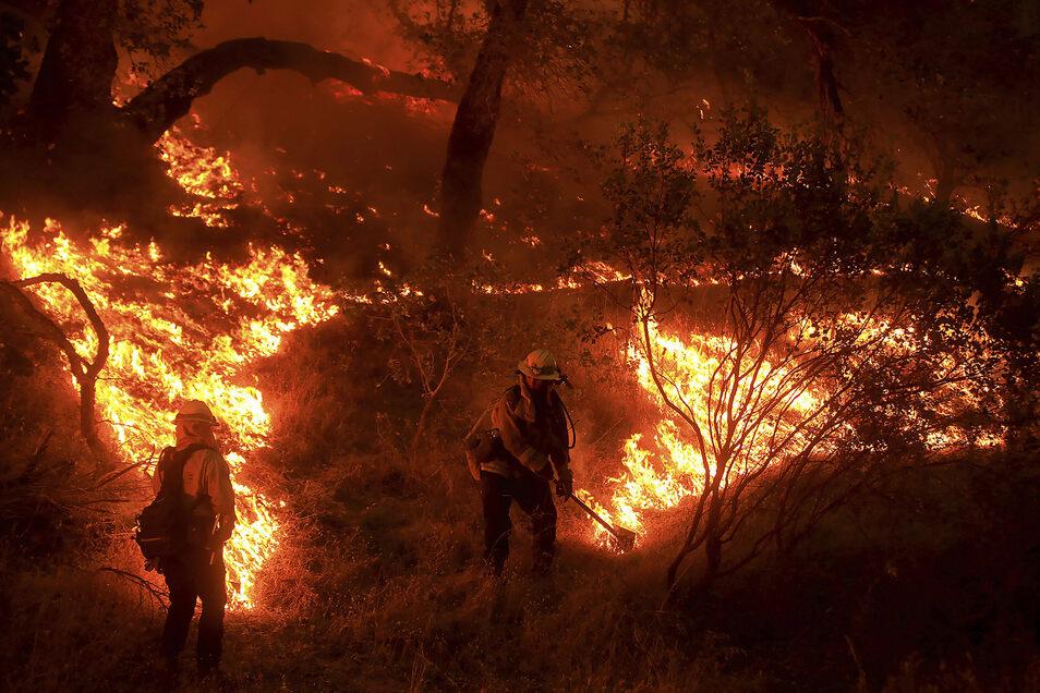 Mitarbeiter der Behörde für Forstwesen und Brandschutz arbeiten zwischen den Flammen eines Waldbrandes im Napa County.
