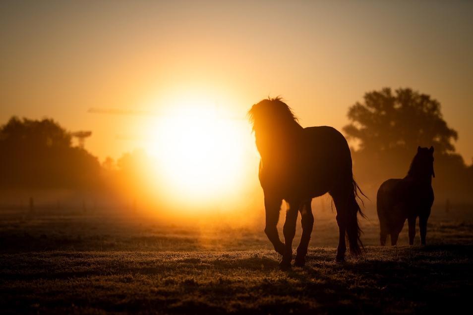 Mehr als 32.500 Pferde leben in Sachsen.