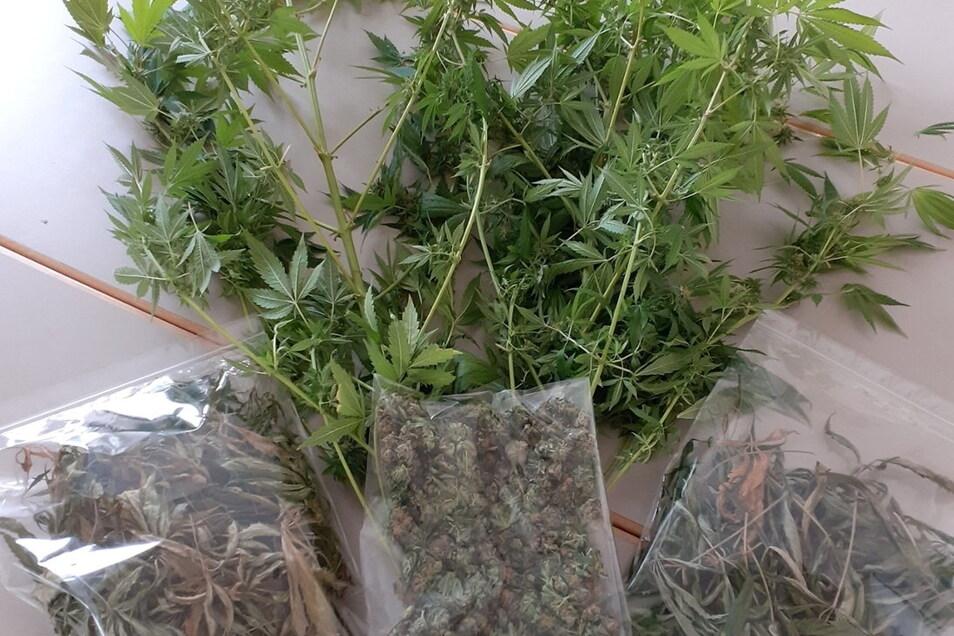 In der Wohnung eines Mittweidaers hat die Polizei zwei Cannabispflanzen und Drogen gefunden.