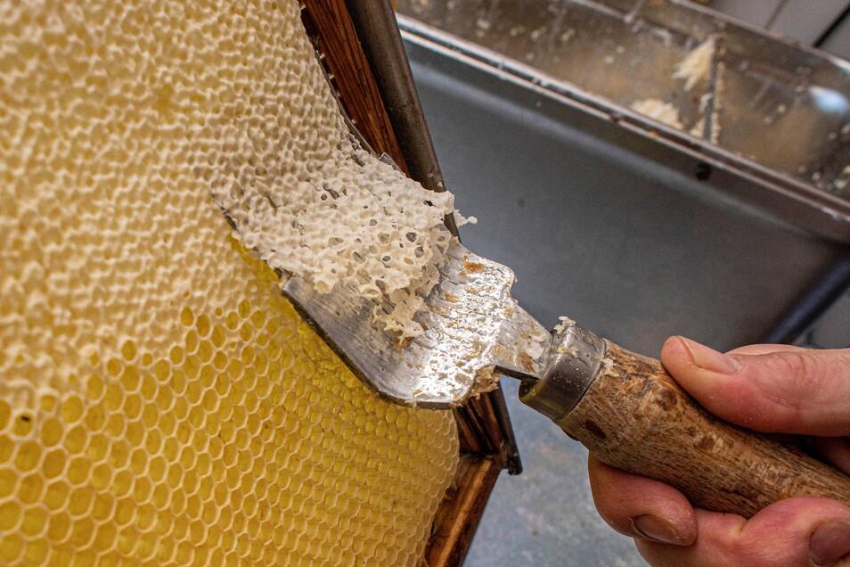 """Wenn der Honig in den Waben reif ist, """"deckeln"""" die Bienen diese mit Wachs. Ein sicheres Zeichen für den Imker, dass er zur Ernte schreiten kann."""