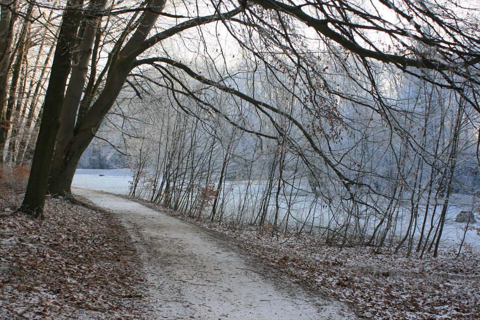 Vorher waren einige Flächen im Loenschen Park mit jungen Bäumen zugewuchert, die sich selbst ausgesät hatten ...