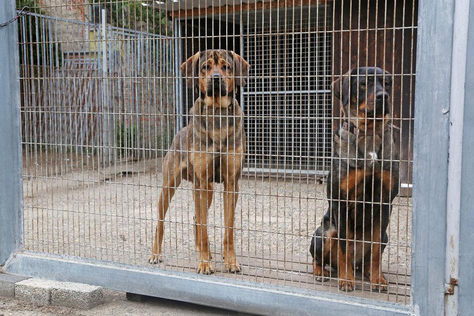 Kein Problemhund, sondern ein Problemmensch machte den Mitarbeitern des Dresdner Tierheims am Donnerstag das Leben schwer.