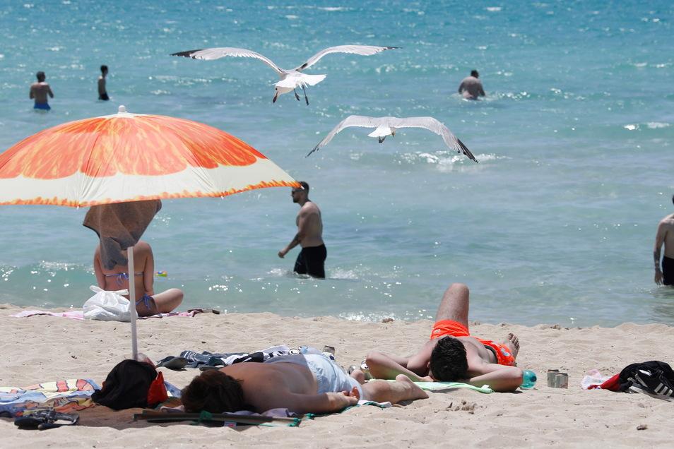 Touristen genießen die Sonne am Strand von Arena auf Mallorca.