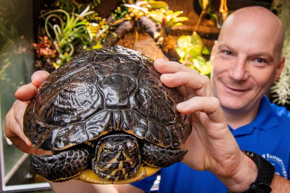 Jens Gießmann vom Aquarien- und Terrarienverein Osiris zeigt eine von drei Schildkröten, die dem Verein in diesem Jahr sozusagen zugelaufen sind. Beim Tag der offenen Tür am Sonntag gibt es aber noch andere, teils exotische Tiere zu sehen.