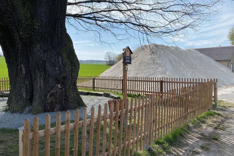 Leise rieselt der Kalk - ganz nah an der 1.000-jährigen Eiche in Herwigsdorf.